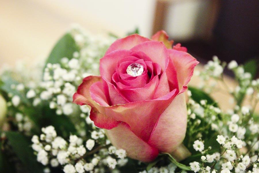 rose viola (3)